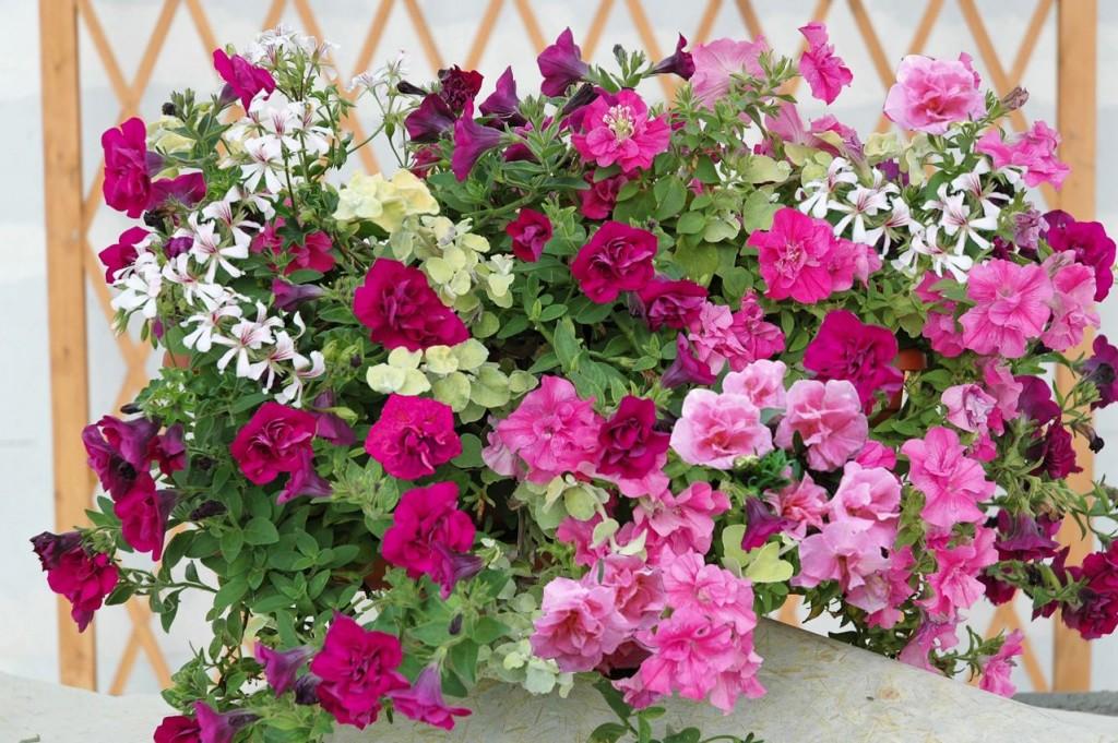 Jardinière de fleurs d'été, création Jardin Express