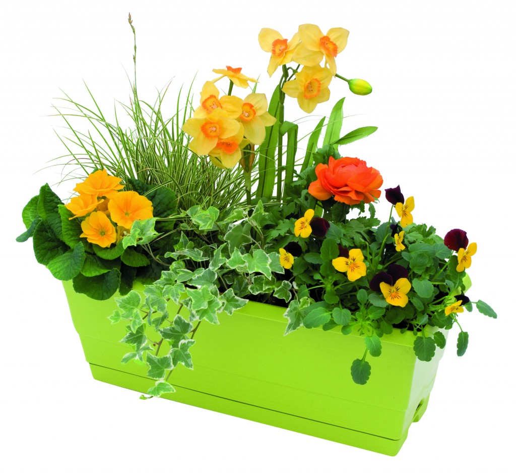 Jardinière de fleurs printanières, Jardiland