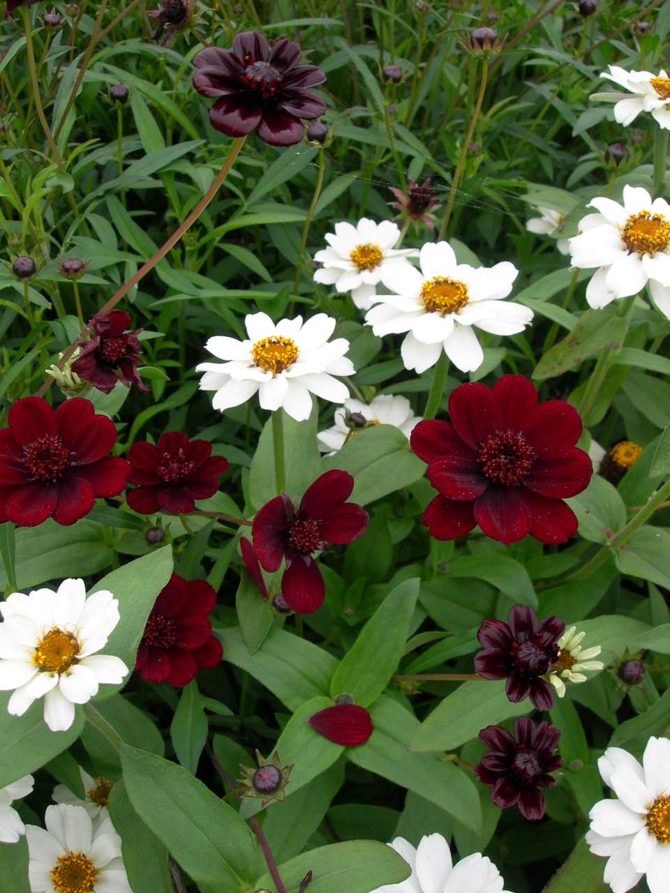 Fleurs d'été pour coins très ensoleillés