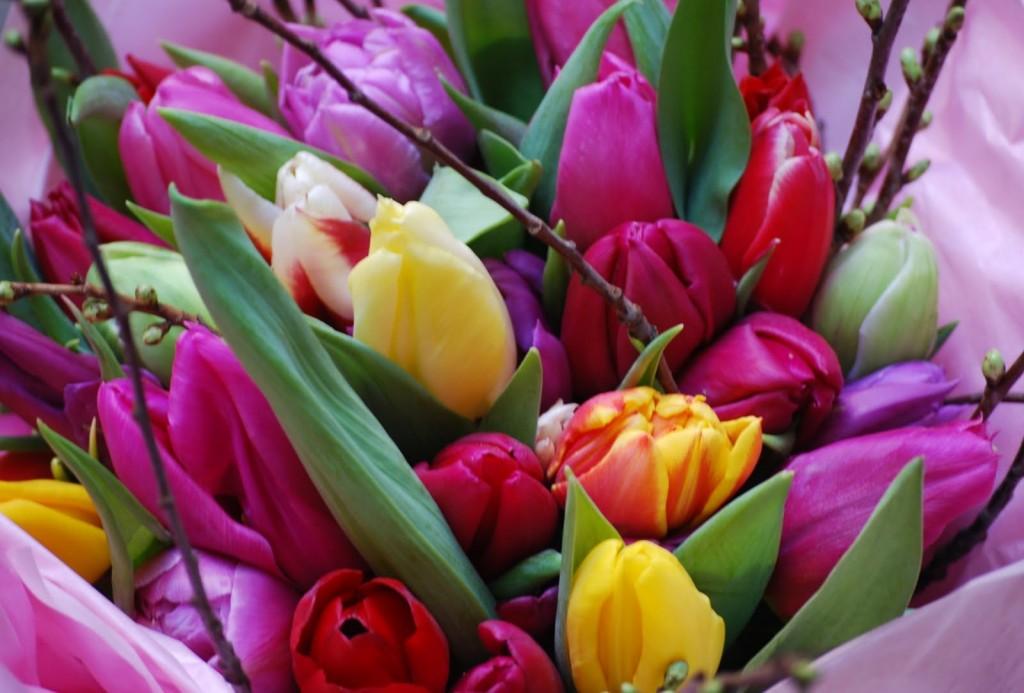Bouquet de tulipes, photo CIBF