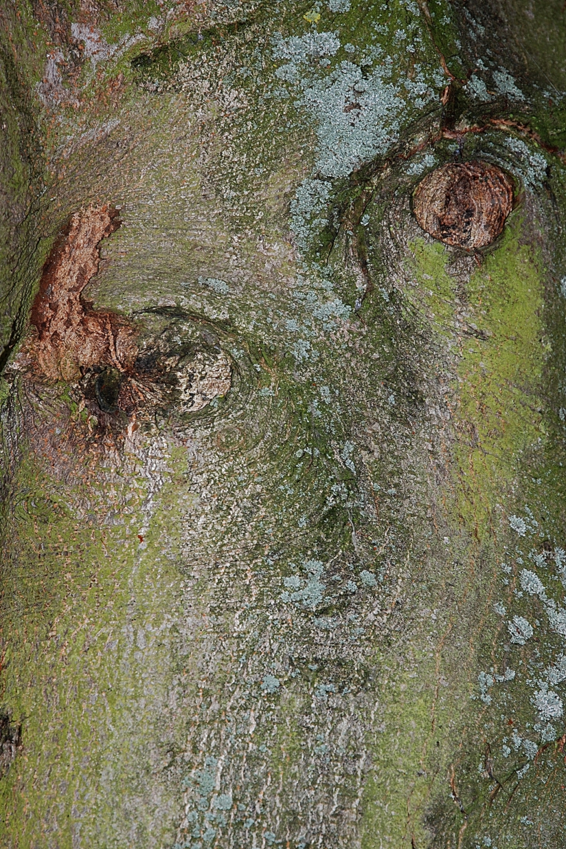 Peau d'arbre, écorce