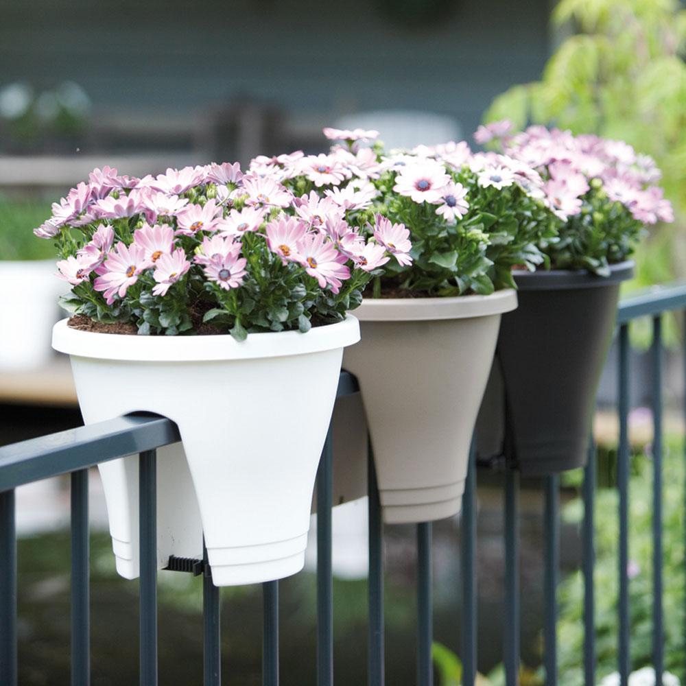 Ostéospermums dans des pots Corsica Flower Bridge (marque Elho) sur une rambarde de balcon