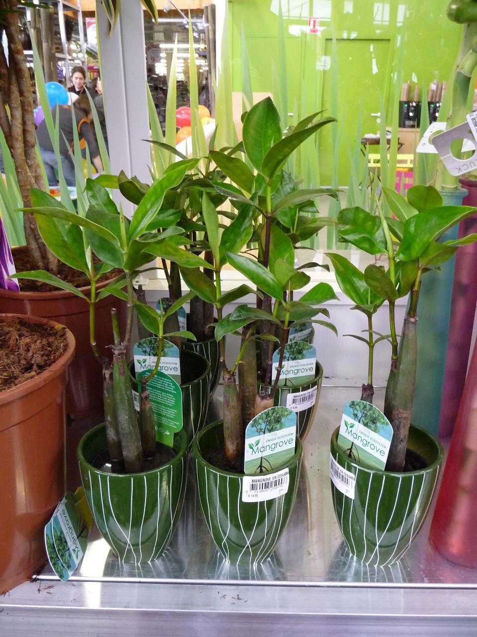 Nouvelle plante d'intérieur