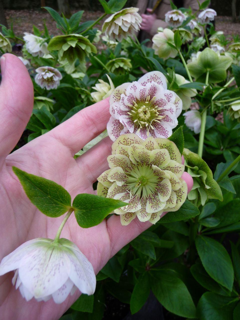 F te des plantes vivaces saint jean de beauregard paris c t jardin - Fete des plantes saint jean de beauregard ...