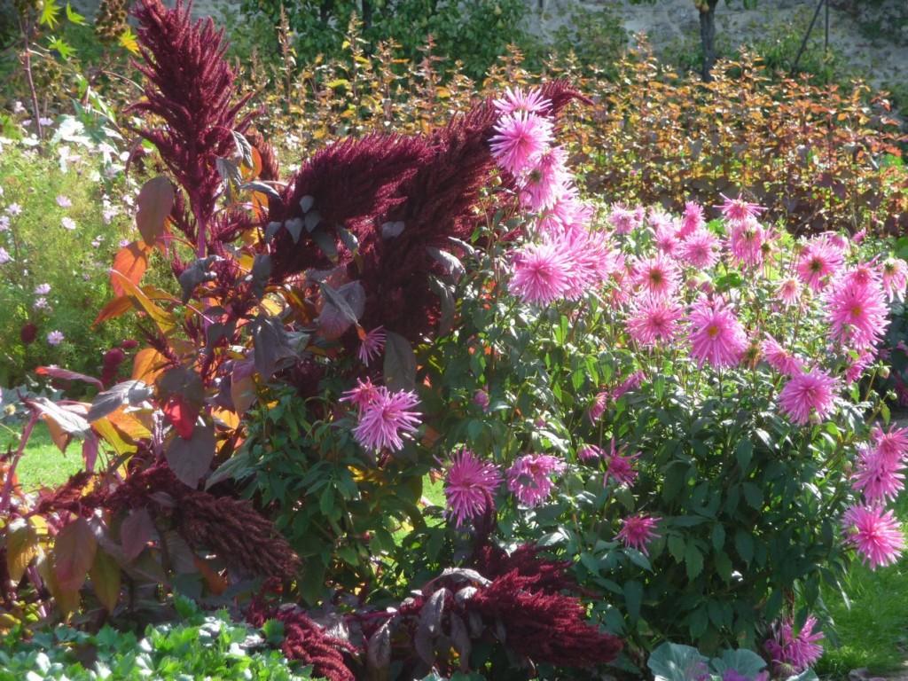 Fleurs d'été et légumes à Saint-Jean-de-Beauregard (91)