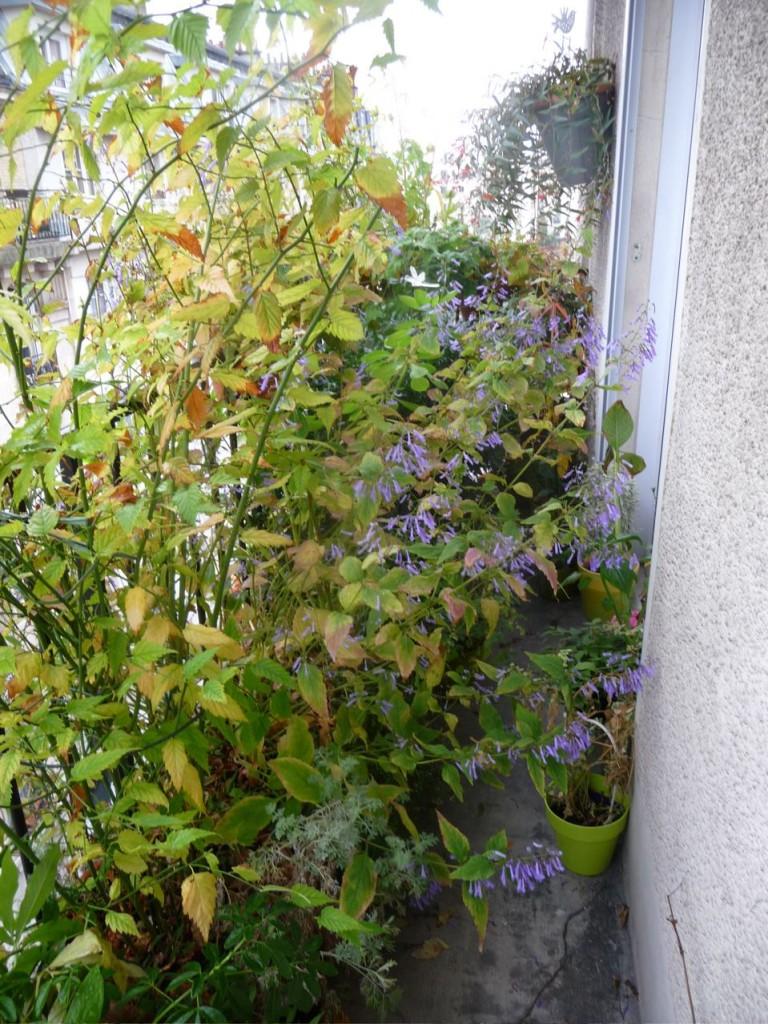 Couleurs d'automne et dernières floraisons sur mon balcon, octobre 2009, photo Alain Delavie