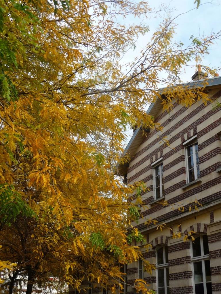 Tilleul aux feuilles dorées, parc de la Villette en automne, photo Alain Delavie