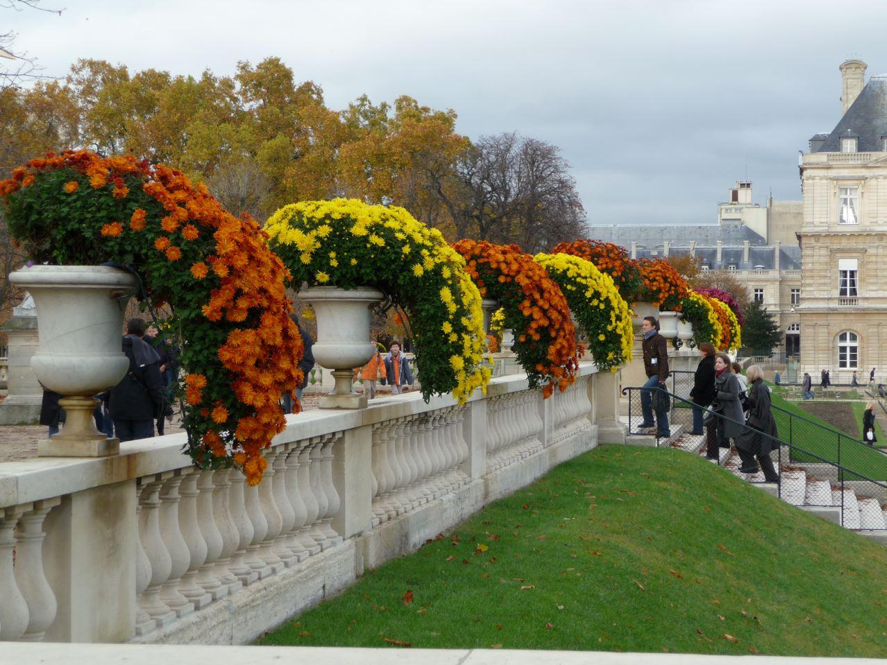 Chrysanthèmes en cascade, jardin du Luxembourg et Sénat, Paris 6ème, photo Alain Delavie