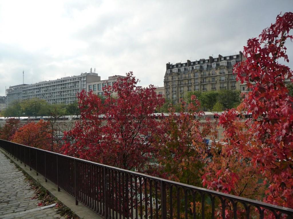 Port de l'arsenal, érables avec leurs feuillages d'automne (Paris, 75), photo Alain Delavie