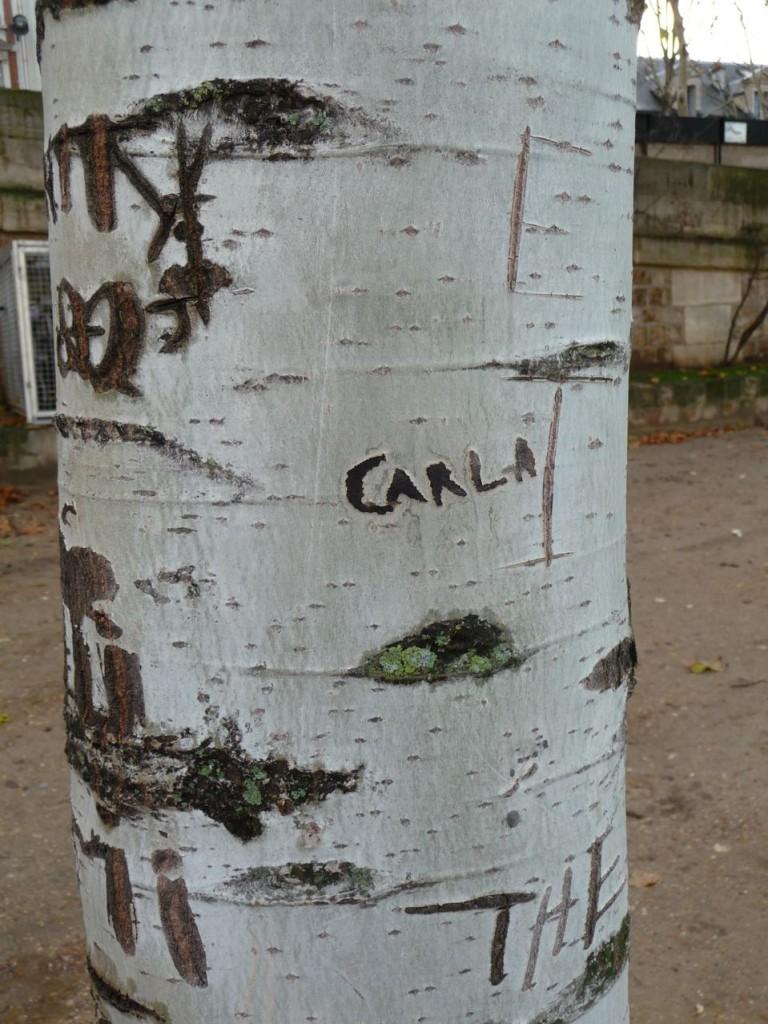 Graffiti sur l'écorce d'un bouleau, quai de Montebello (Paris 5ème), photo Alain Delavie