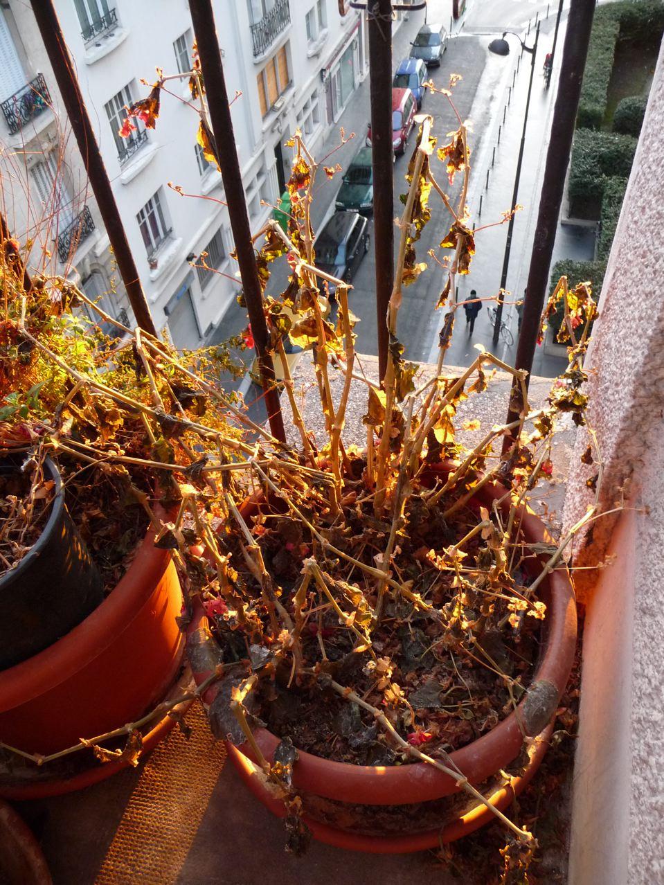 Les effets du froid intense sur les plantes