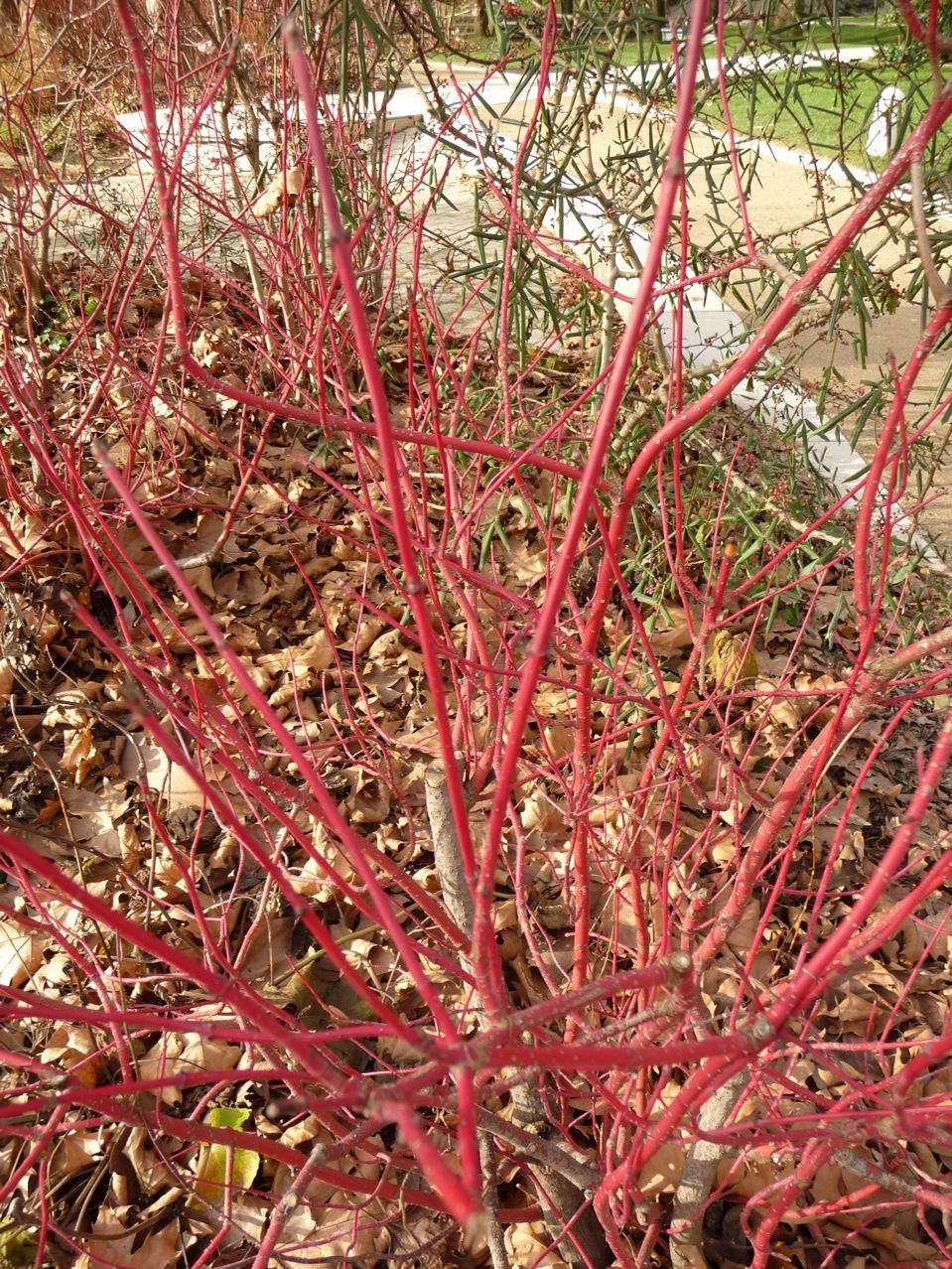 Écorce décorative et jardin en hiver