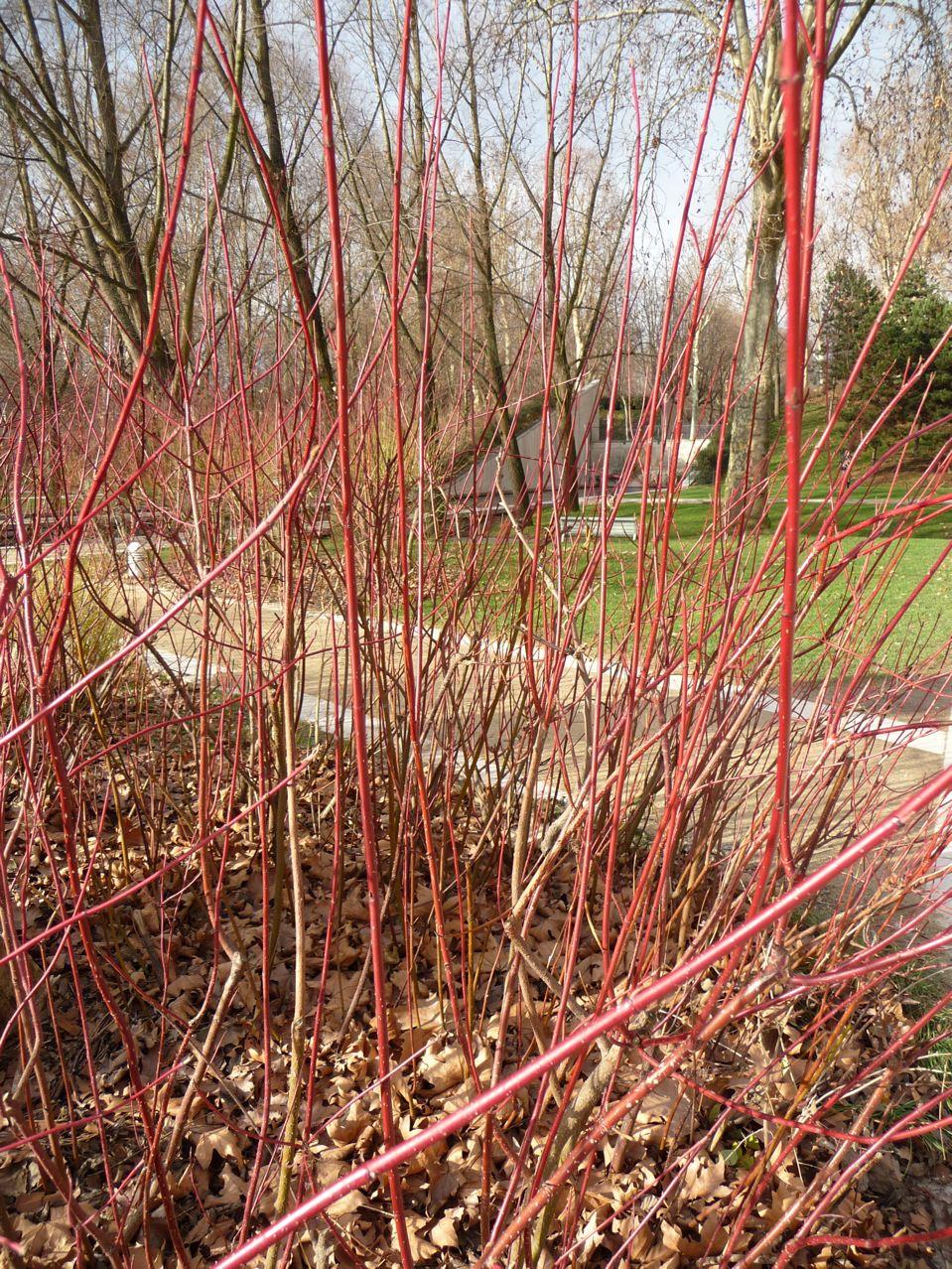 Écorces décoratives et jardin en hiver