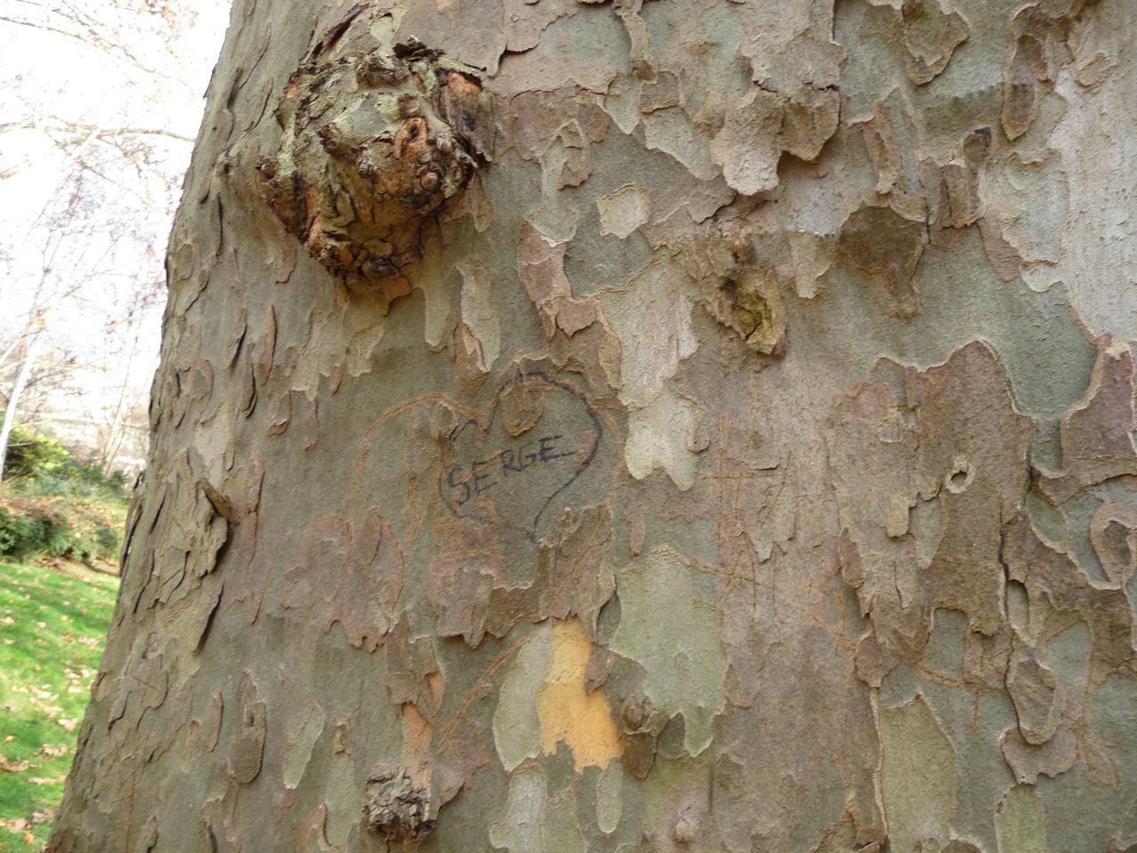Écorce d'arbre décorative