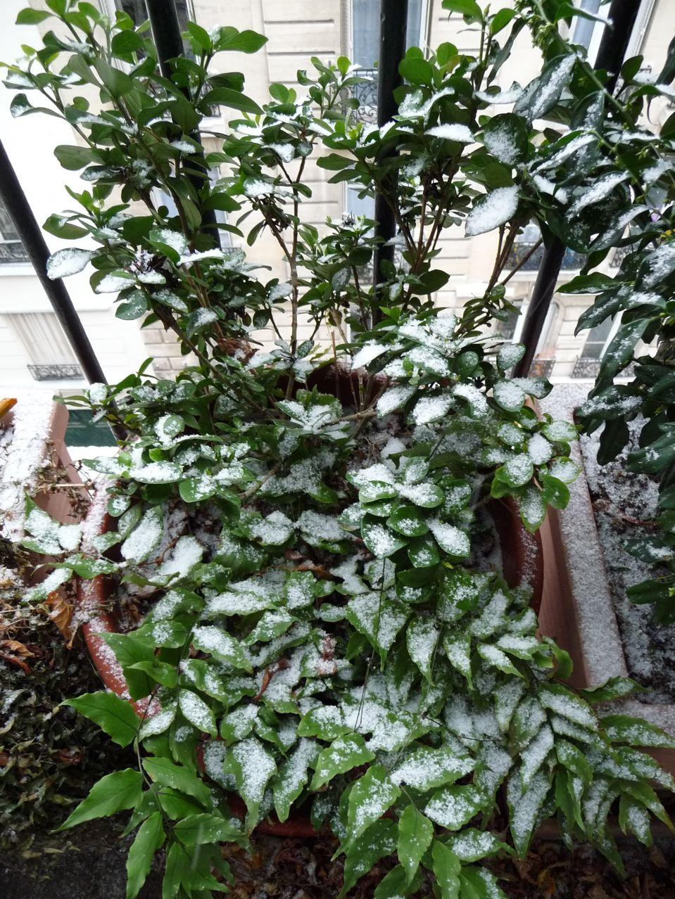 Balcon en hiver sous la neige