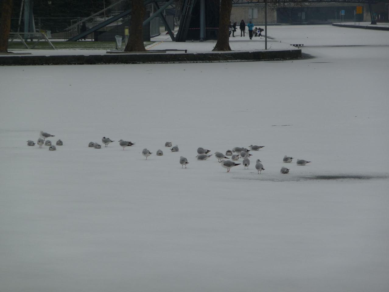 Les oiseaux dans Paris en hiver
