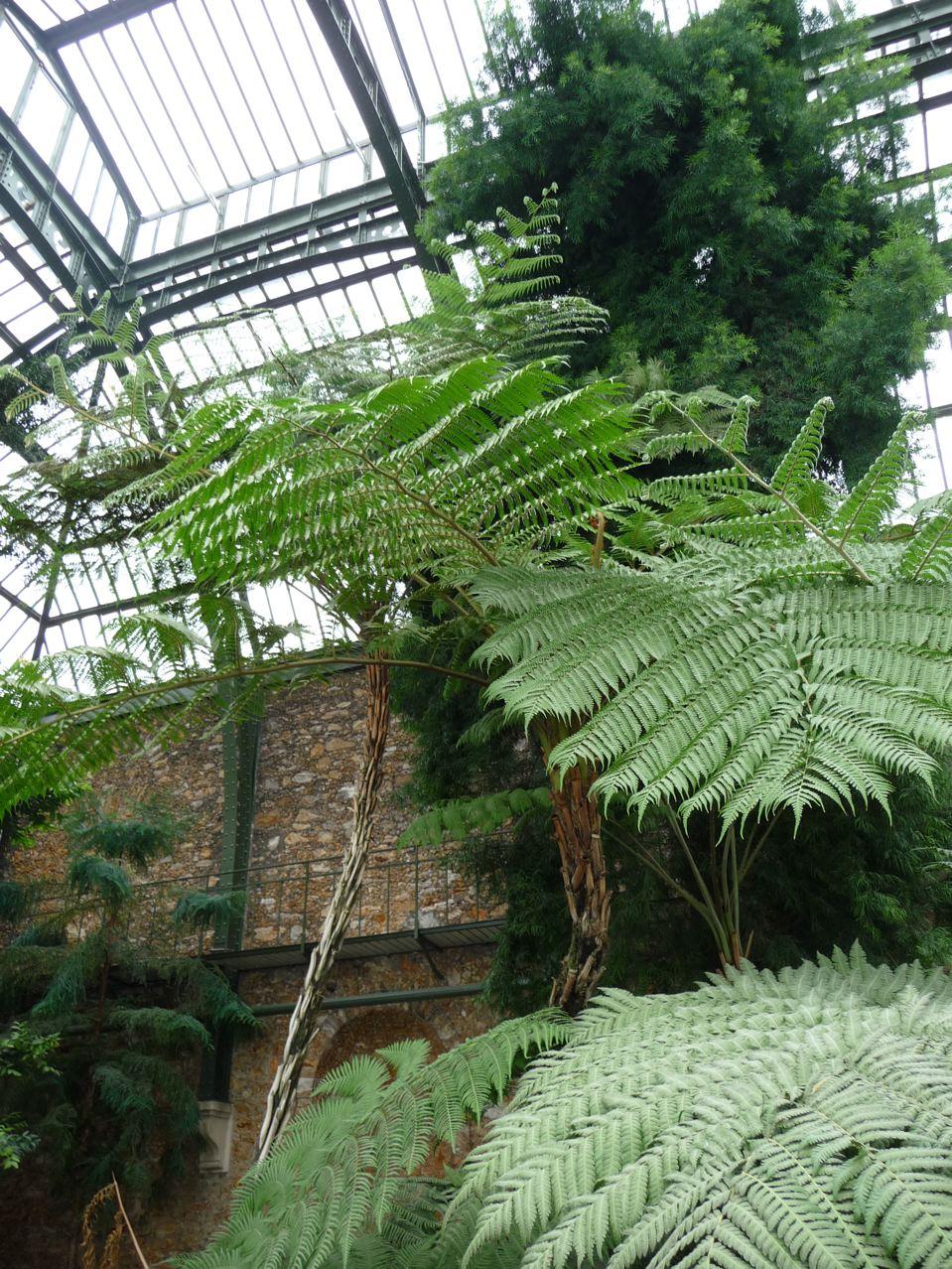 Serre du Jardin des Plantes de Paris