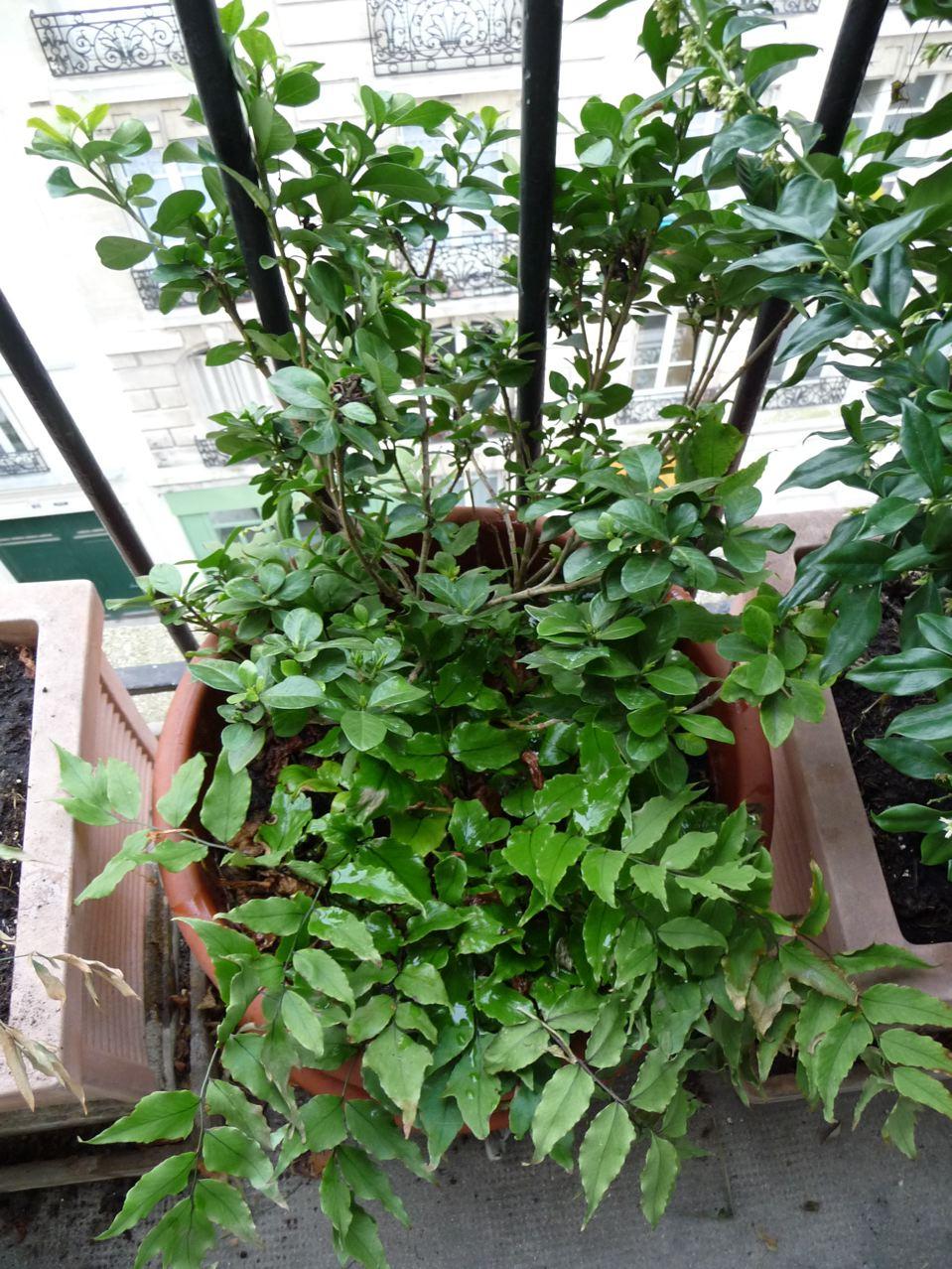 Plantes exotiques rustiques