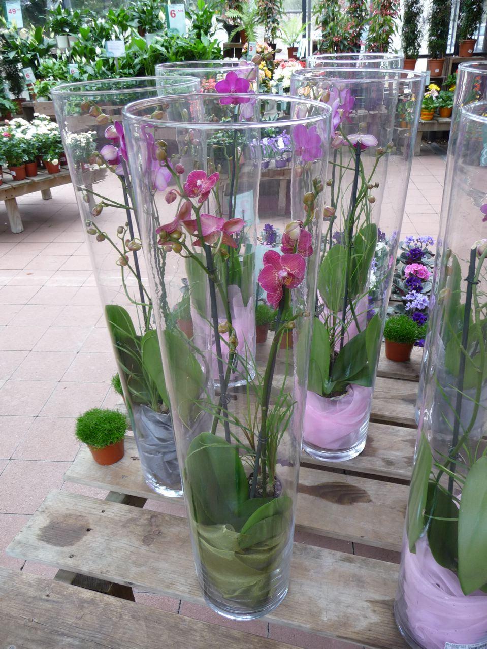 Art floral : orchidée en vase