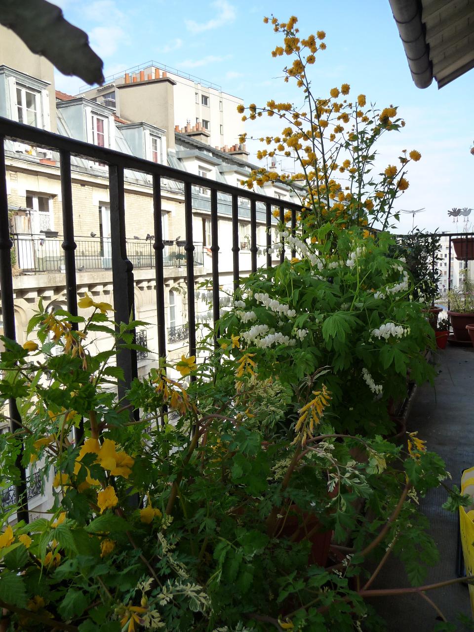 Jardin printanier sur balcon dans Paris