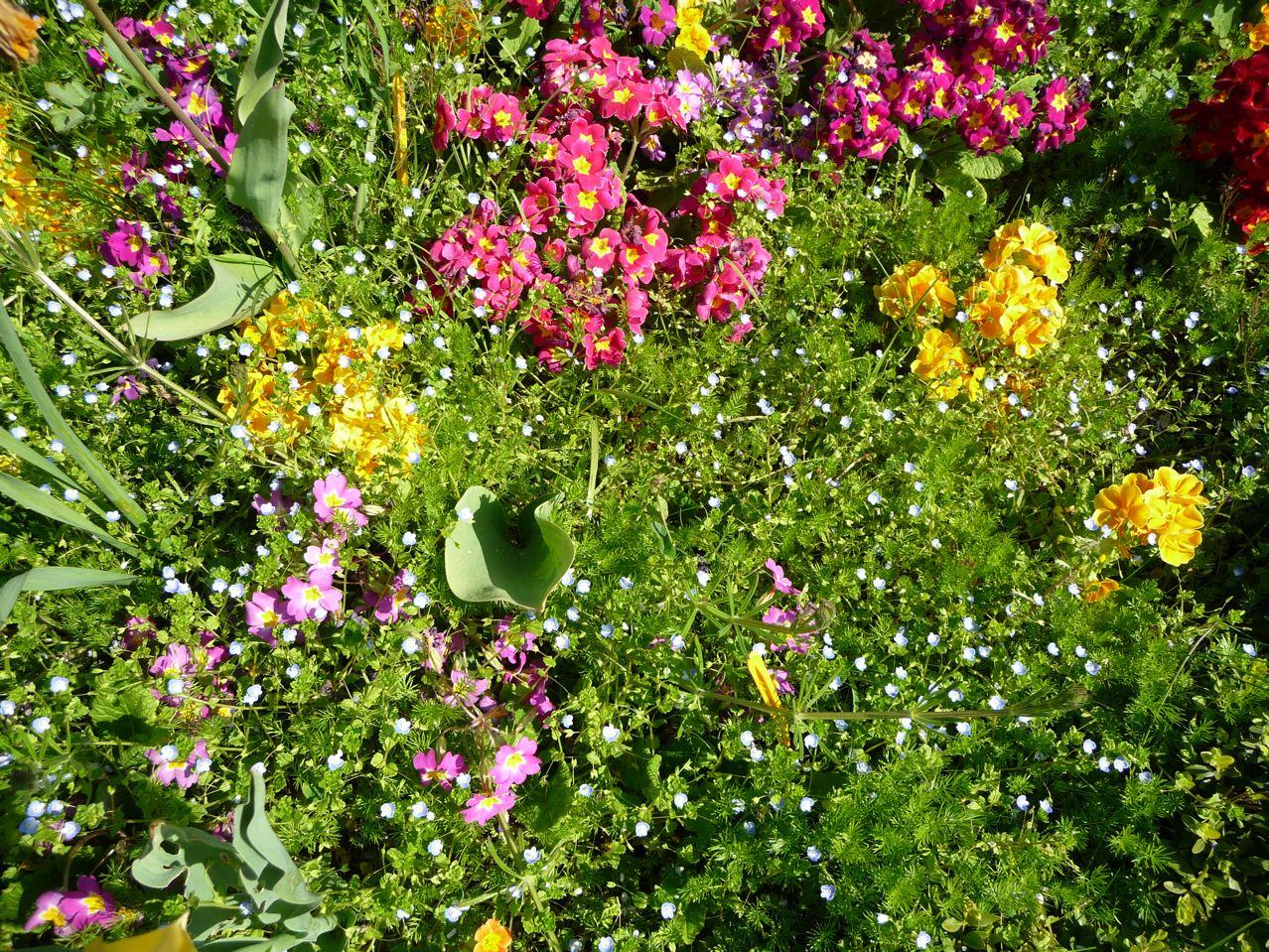 Mauvaises herbes envahissantes dans les plates-bandes printanières