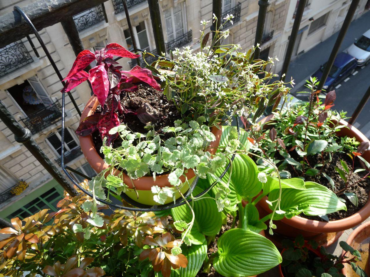 Mes plantations sur mon balcon