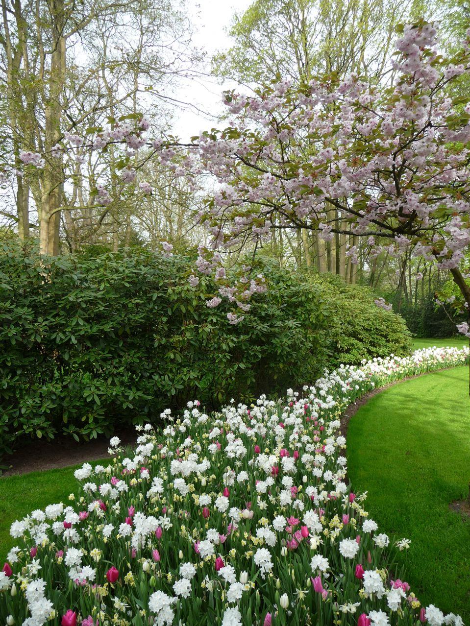 Floraisons printanières dans le parc de Keukenhof en Hollande