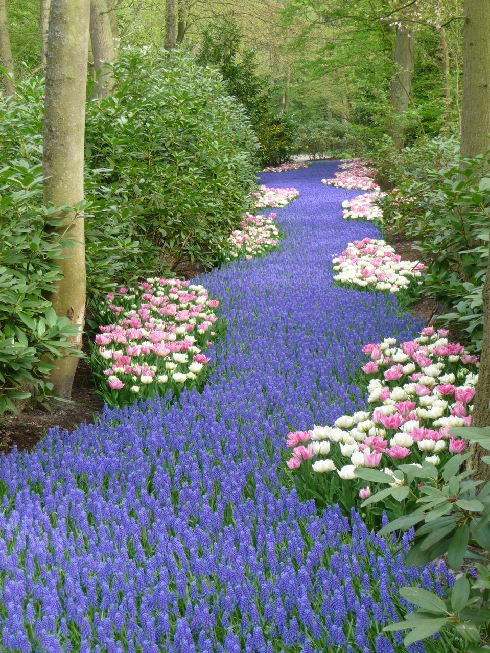 Les incroyables floraisons printanières de Keukenhof en Hollande