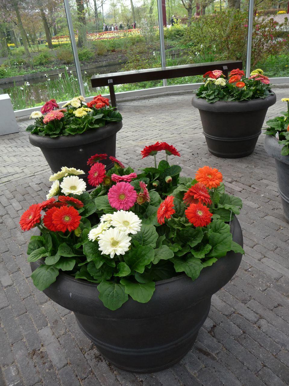 Potées fleuries