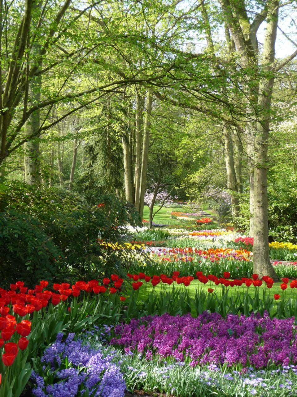 Bulbes à floraison printanières dans le parc de Keukenhof en Hollande