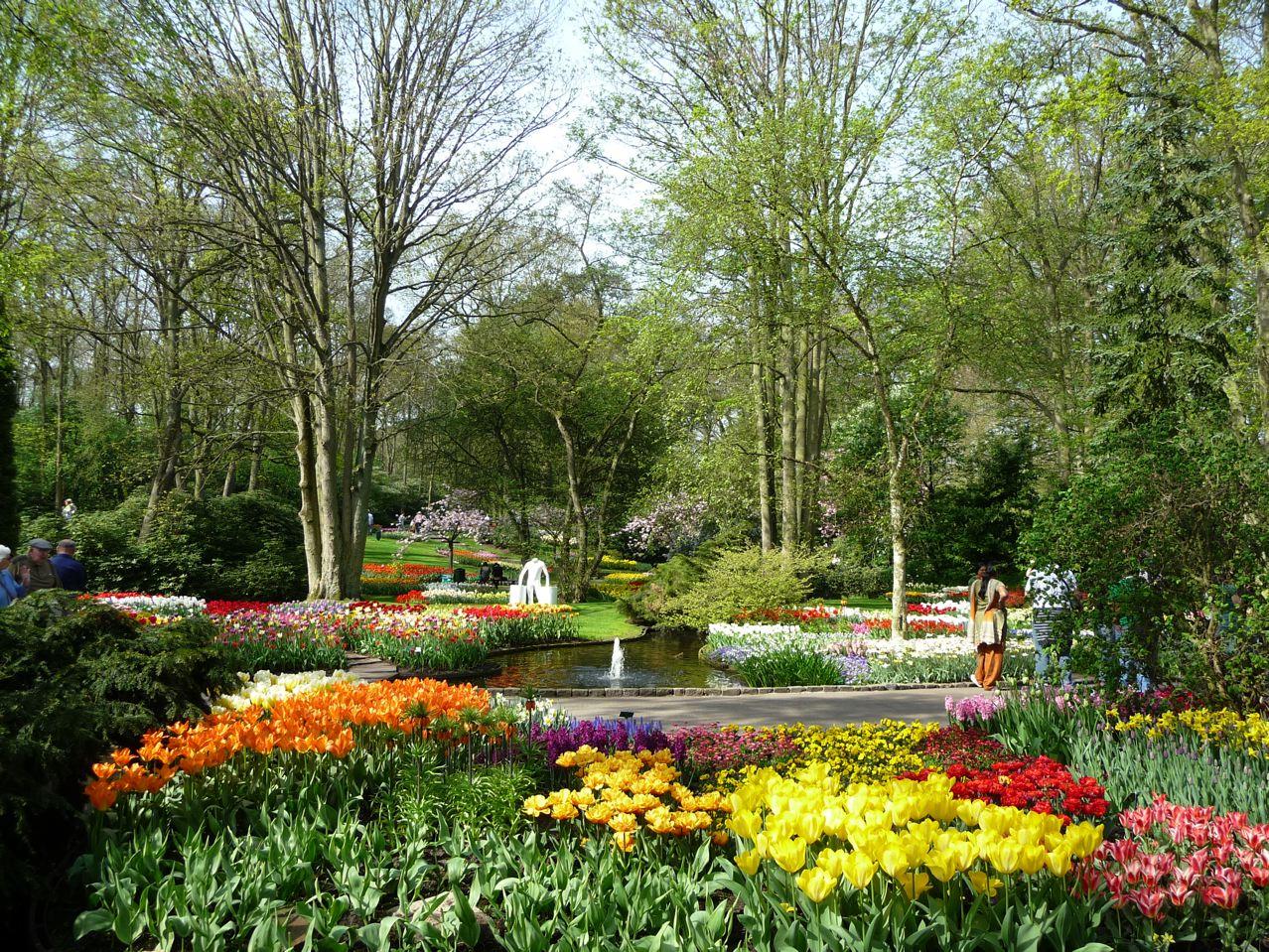 Les floraisons des bulbes de printemps sous le soleil à Keukenhof en Hollande