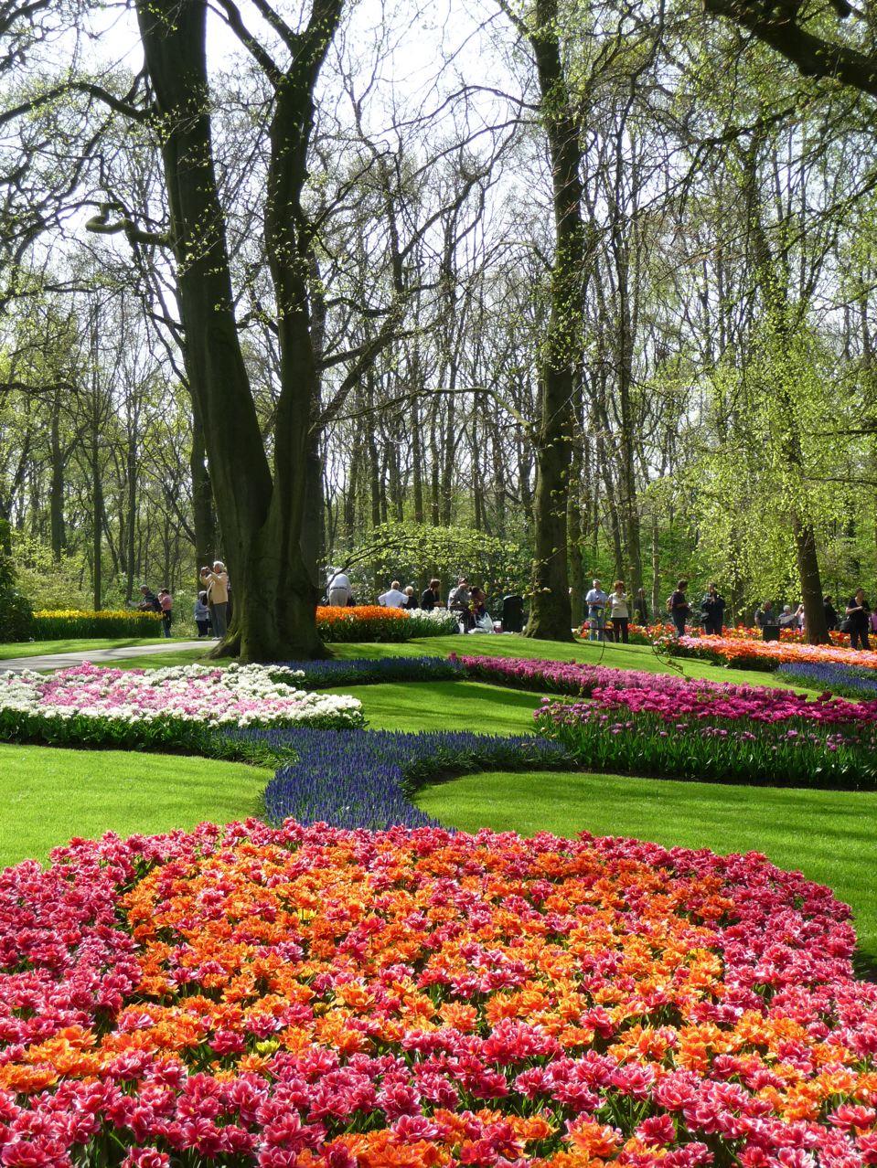 Les floraisons printanières de Keukenhof en Hollande