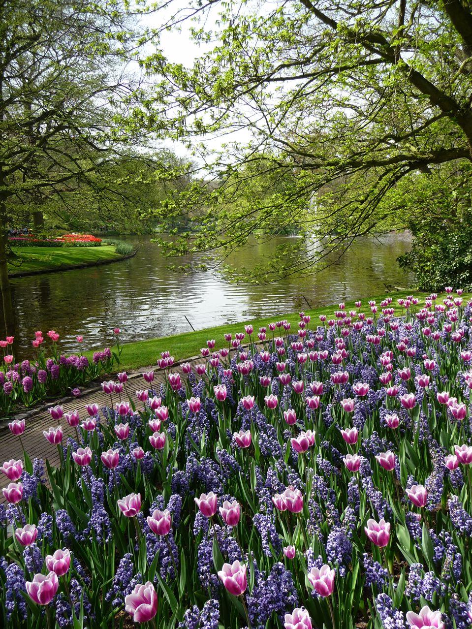 Floraisons printanières dans Keukenhof en Hollande
