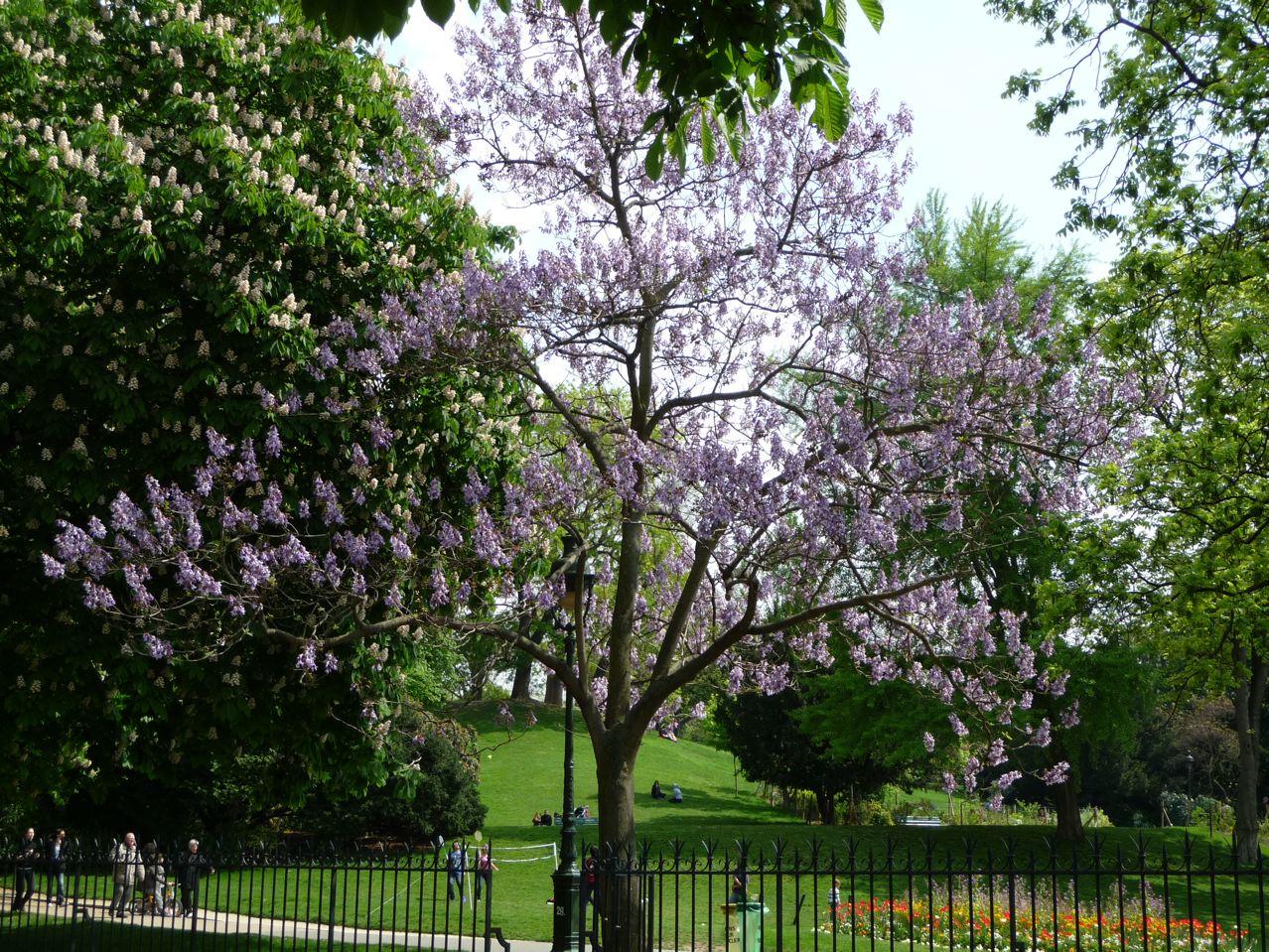 Arbres à fleurs dans Paris au printemps