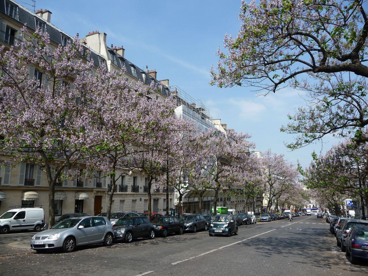 Arbres d'alignement dans Paris