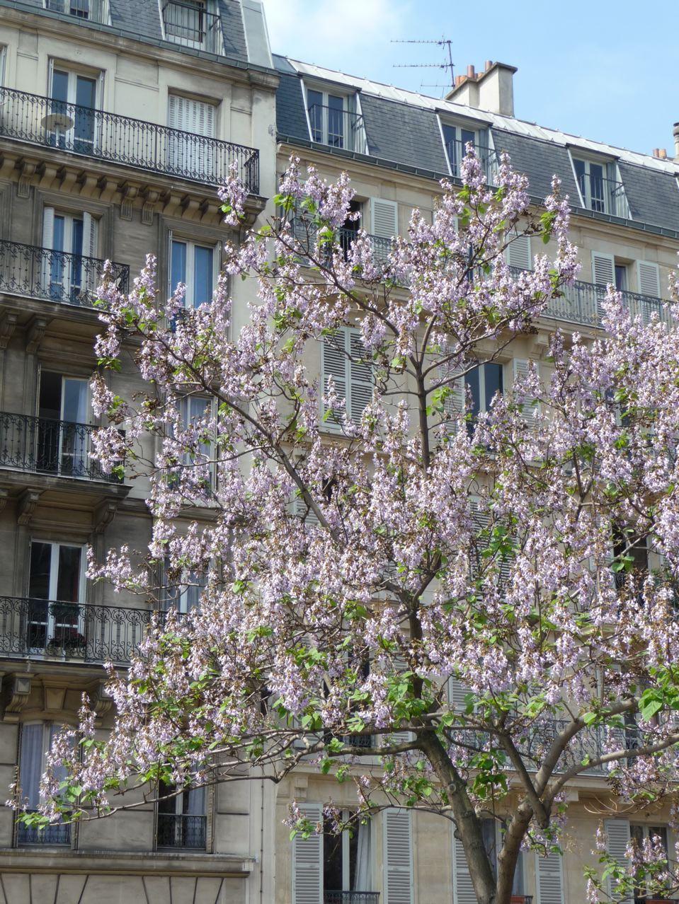 Arbre à floraison printanière