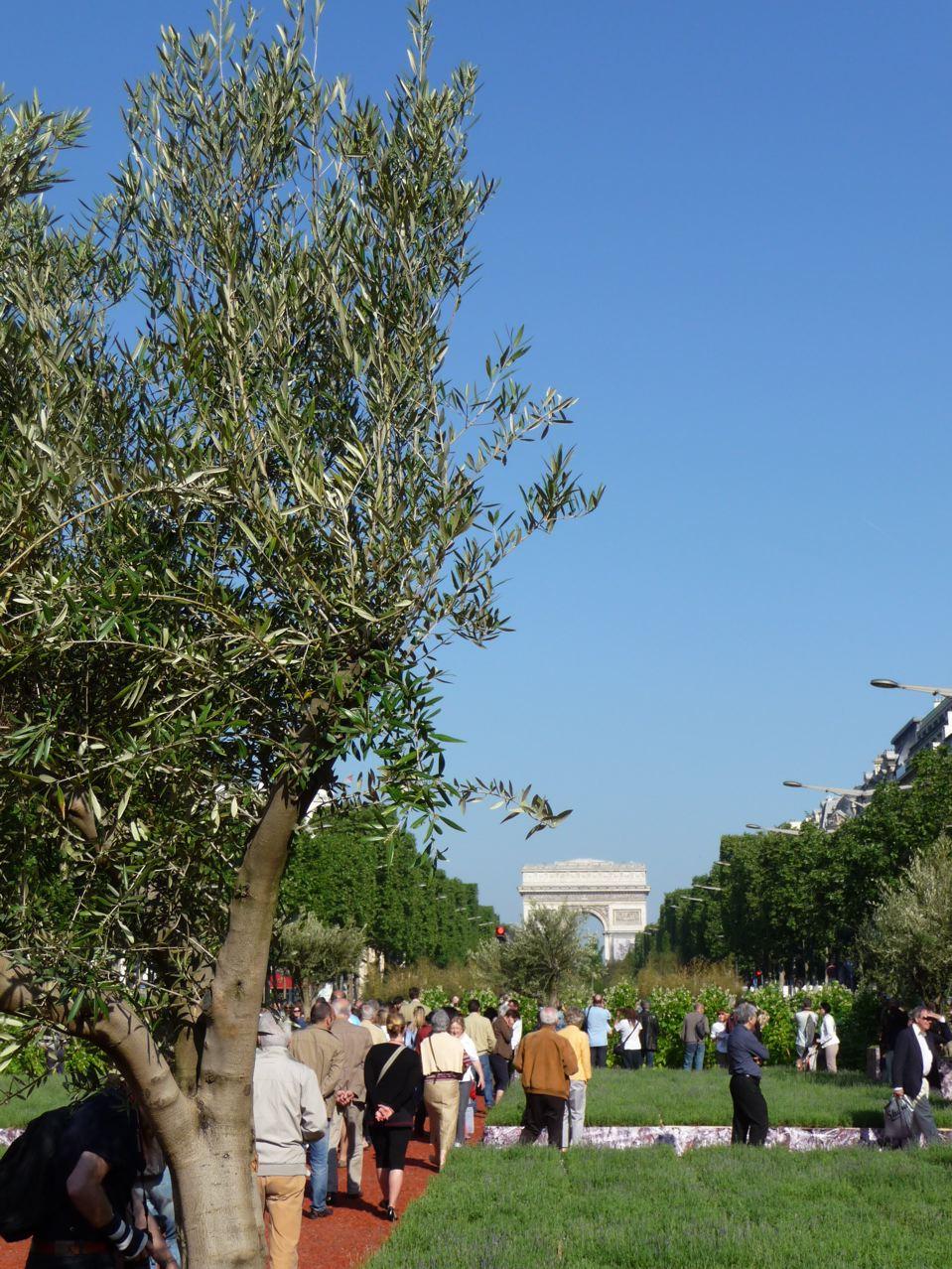 Plantes méditerranéennes dans Paris