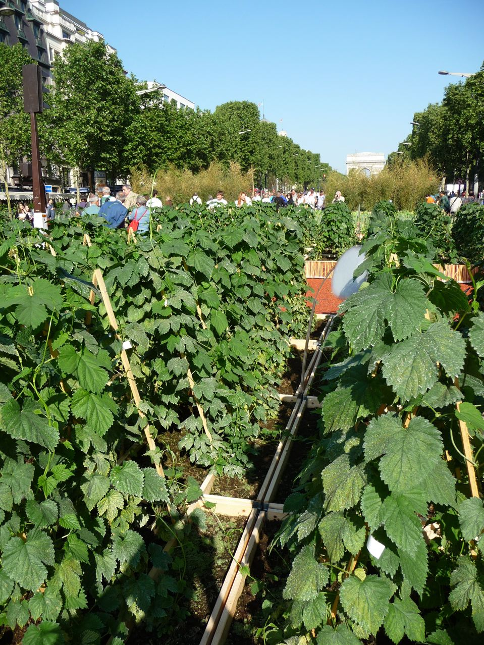 80% de la production agricole française représentée sur les Champs-Élysées