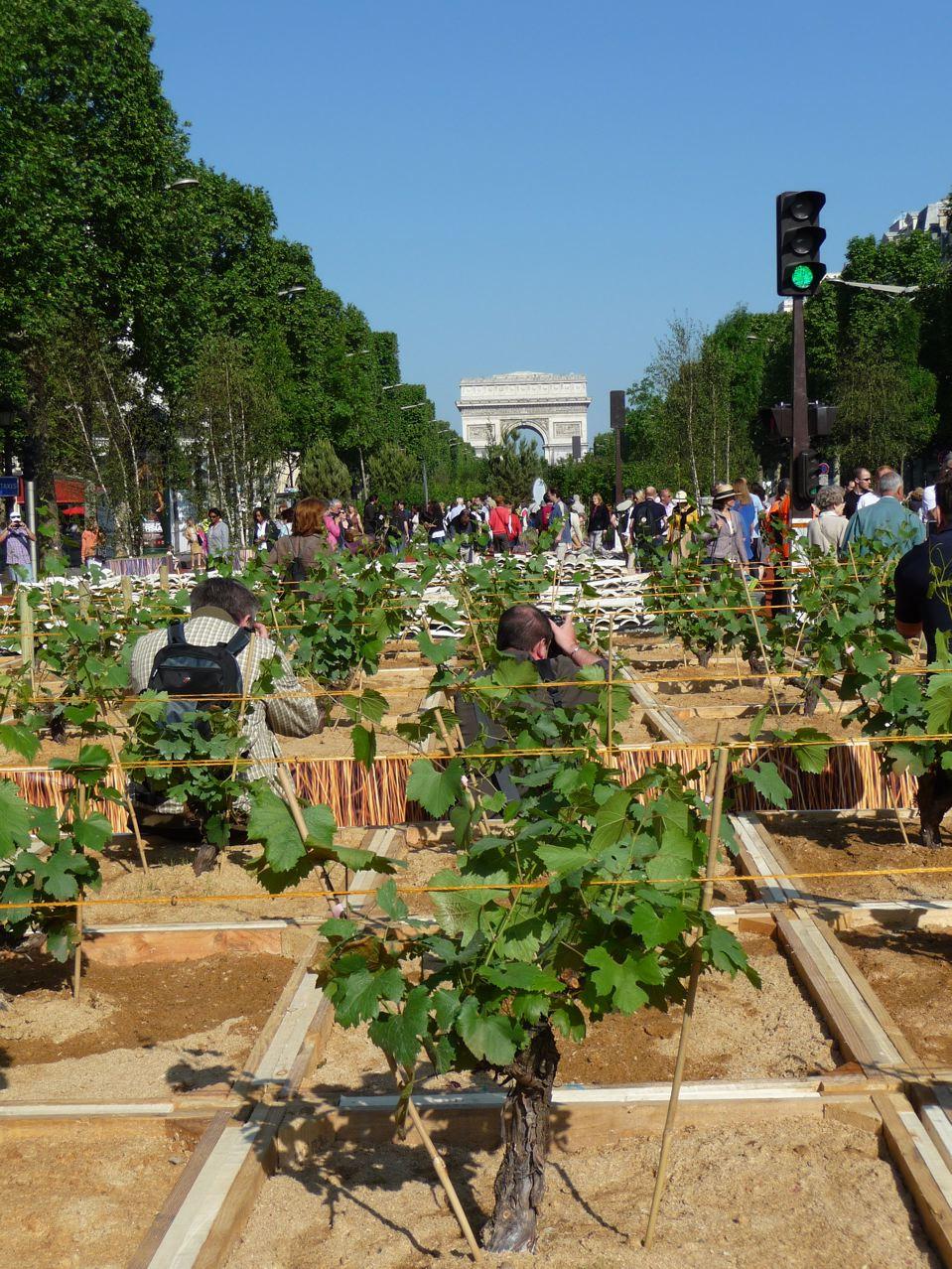 Vignes dans Paris