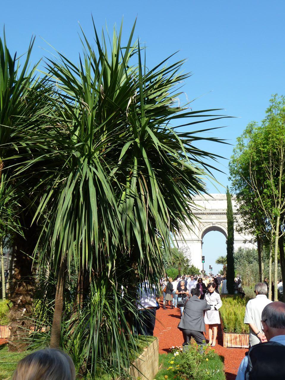 Nature et exotisme dans Paris