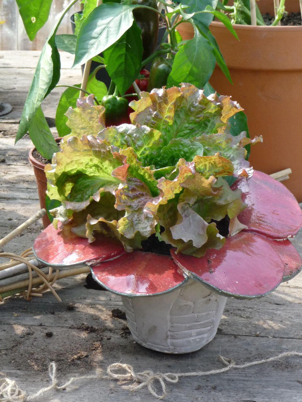 La salade, un légume déco