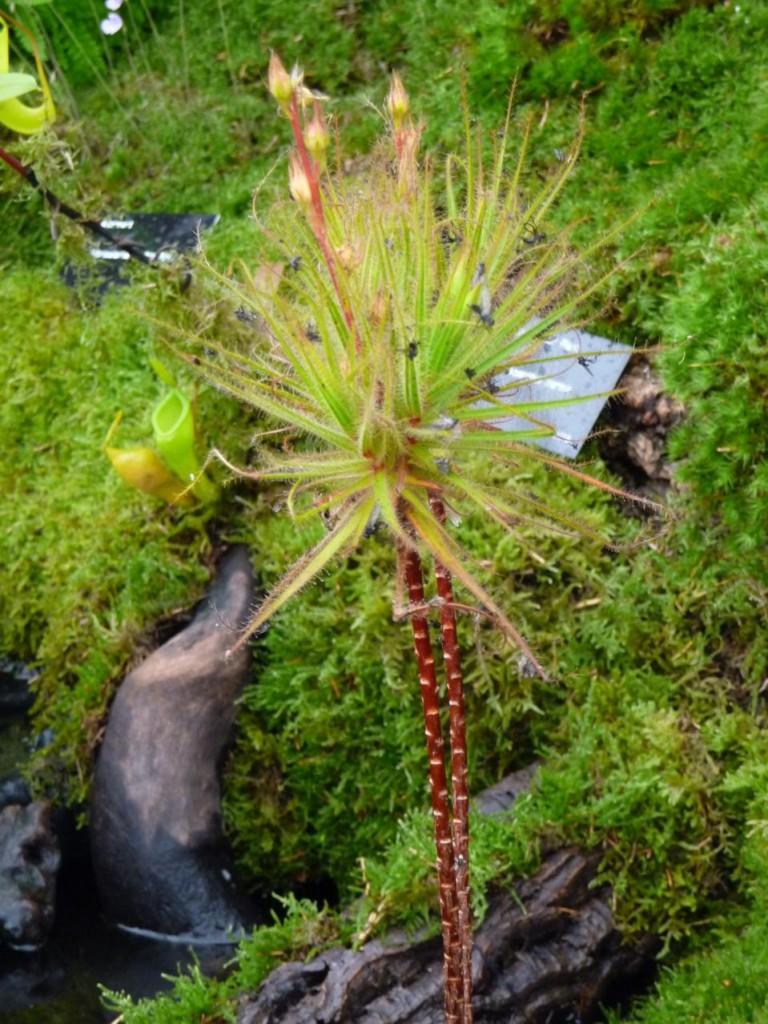 Surprenante plante carnivore