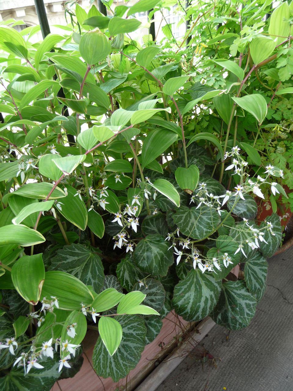 Plantes vivaces en bac