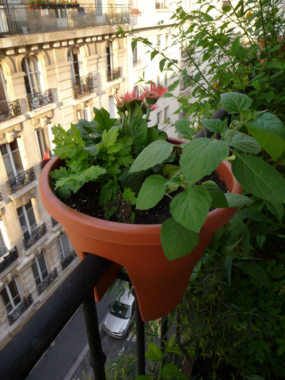 Mini jardin suspendu sur balcon
