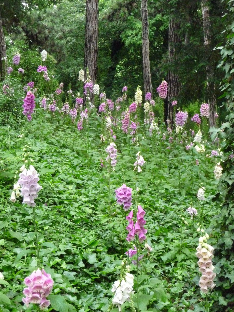 Fleurs printanières pour coins ombragés et frais