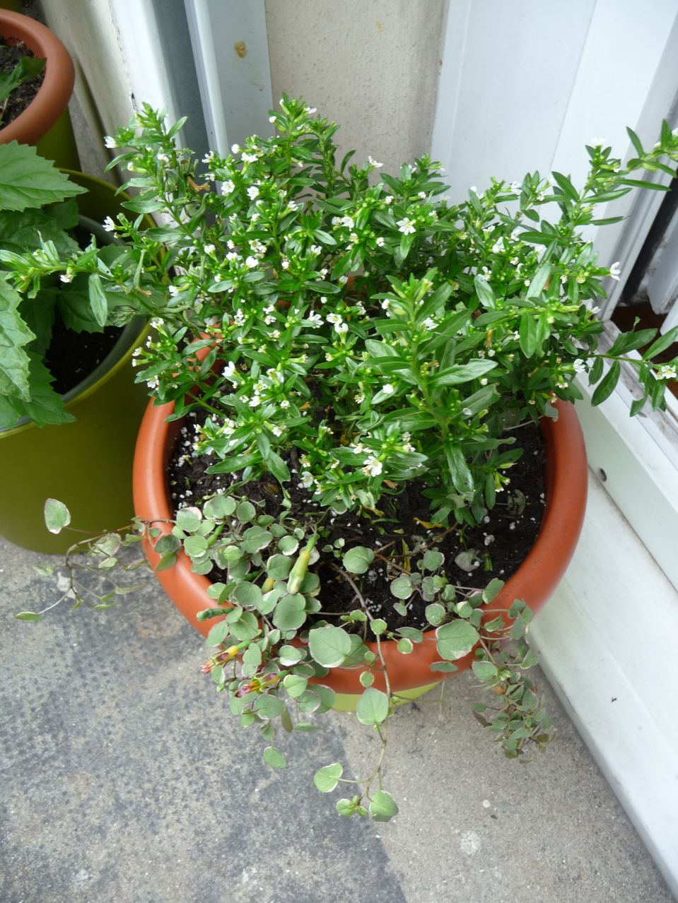 Plantes exotiques pour coins ombragés