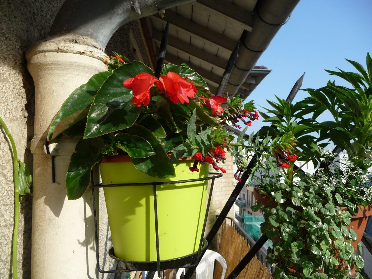 Fleurs annuelles d'été sur balcon