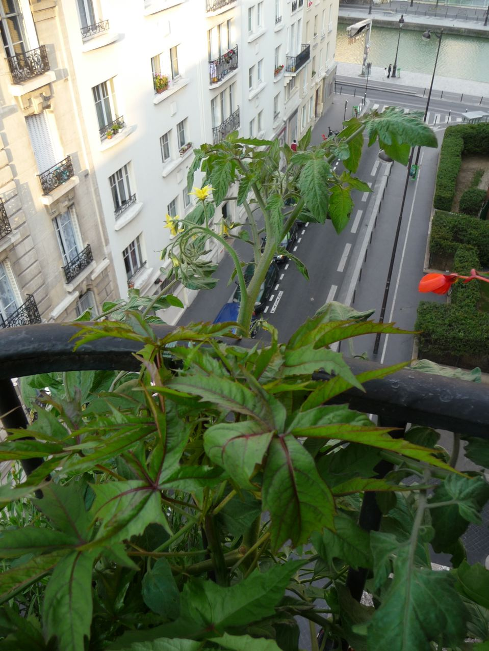 Légume sur balcon