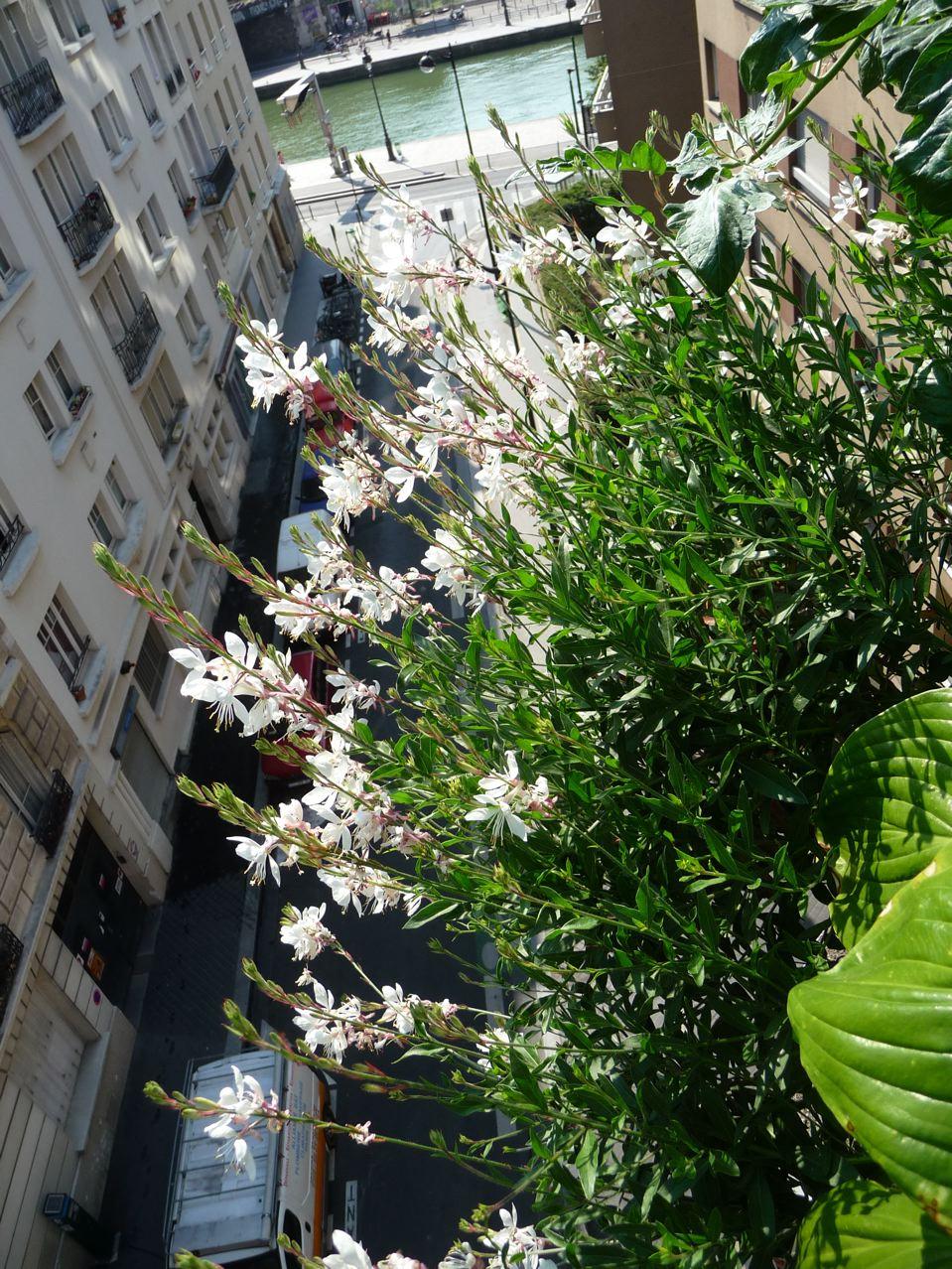 Floraison estivale sur mon balcon