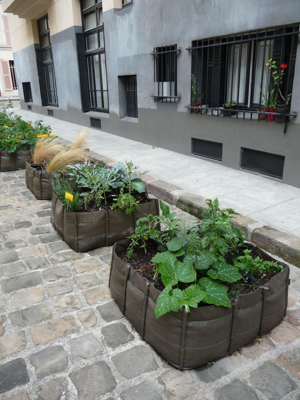Cultures de légumes et petits potagers dans Paris